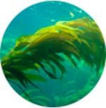 Minerálne vápnik z morských rias lithothamnia