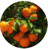 Extrakt z horkého pomaranča